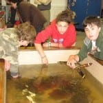 Meig's Point touch tank