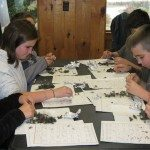 Meigs Point Nature Center study and dissection of owl pellets with Ranger Russ